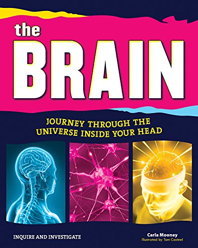 Brain Pictures and Nerve Anatomy for Kids