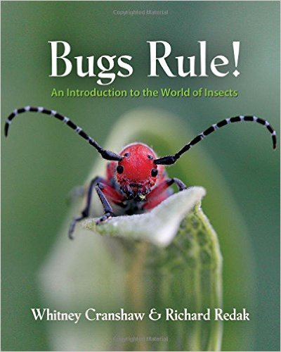 Insects And Bugs For Kids
